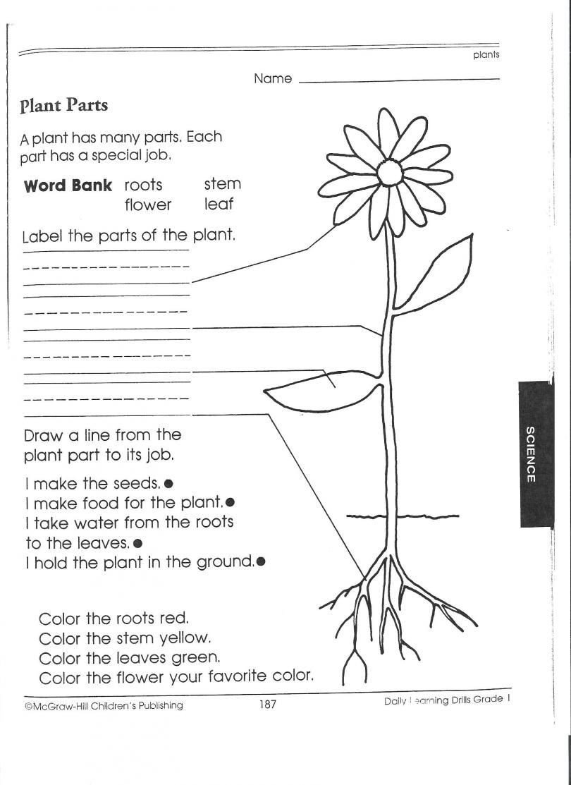 astonishing science worksheets for 2nd grade 1st picking apart plants people pdf printable first