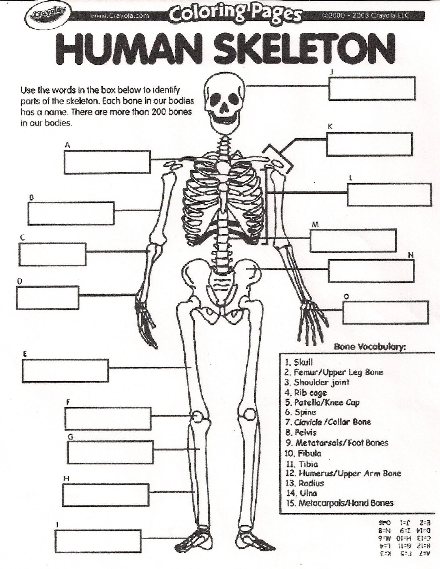 Blank Bone Worksheets August All About Me Bones