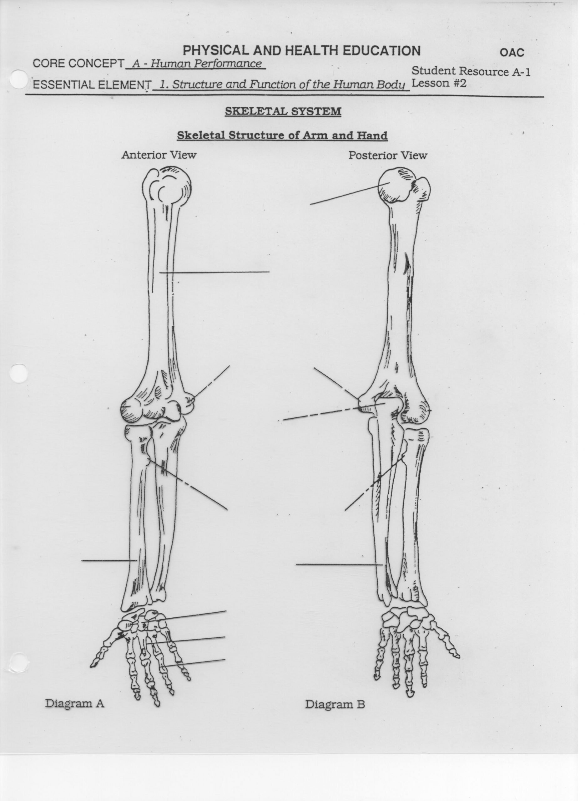 Blank Bone Worksheets Blank Leg Bones Diagram Worksheet