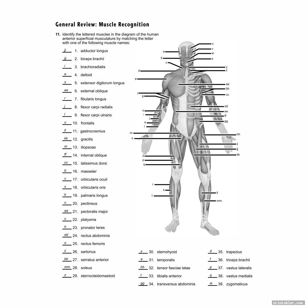 Blank Bone Worksheets Printable Worksheets Muscle Anatomy Printabler