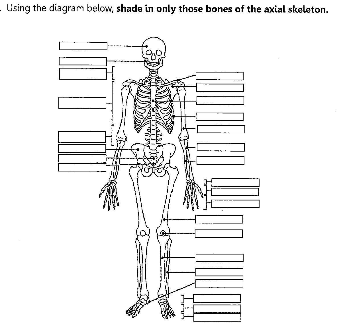 Blank Bone Worksheets Skeletal System Fill In the Blank Worksheets