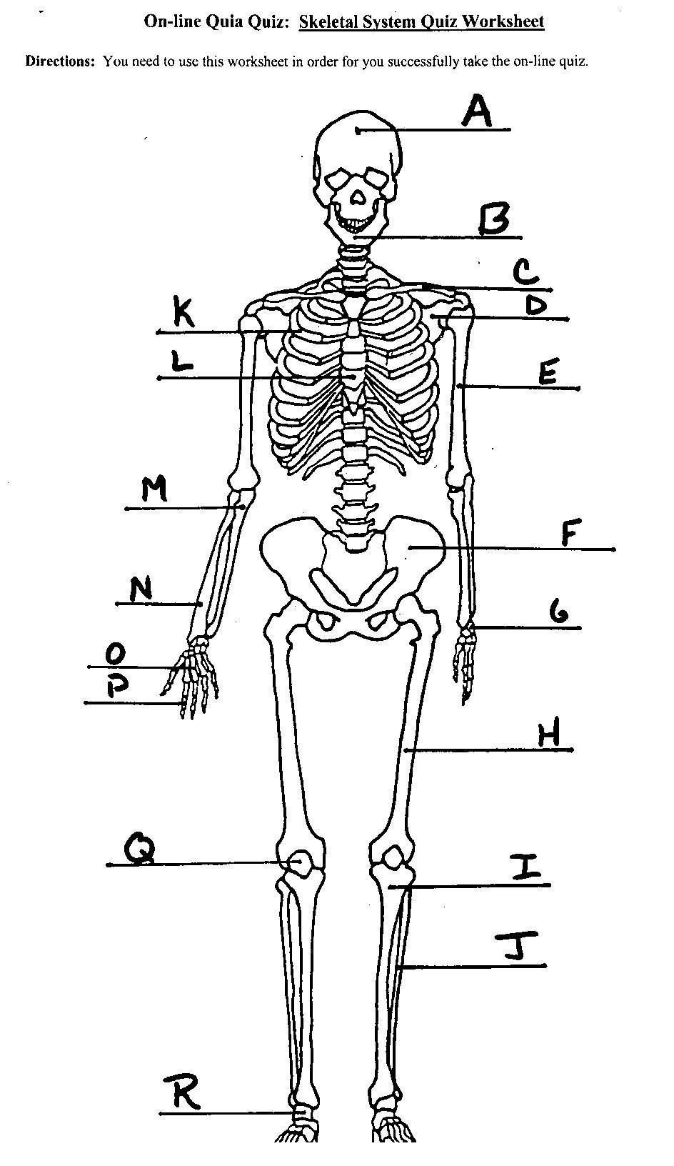 Blank Bone Worksheets Unlabeled Human Skeleton Diagram