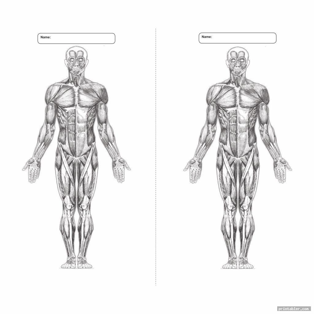 blank printable worksheets muscle anatomy
