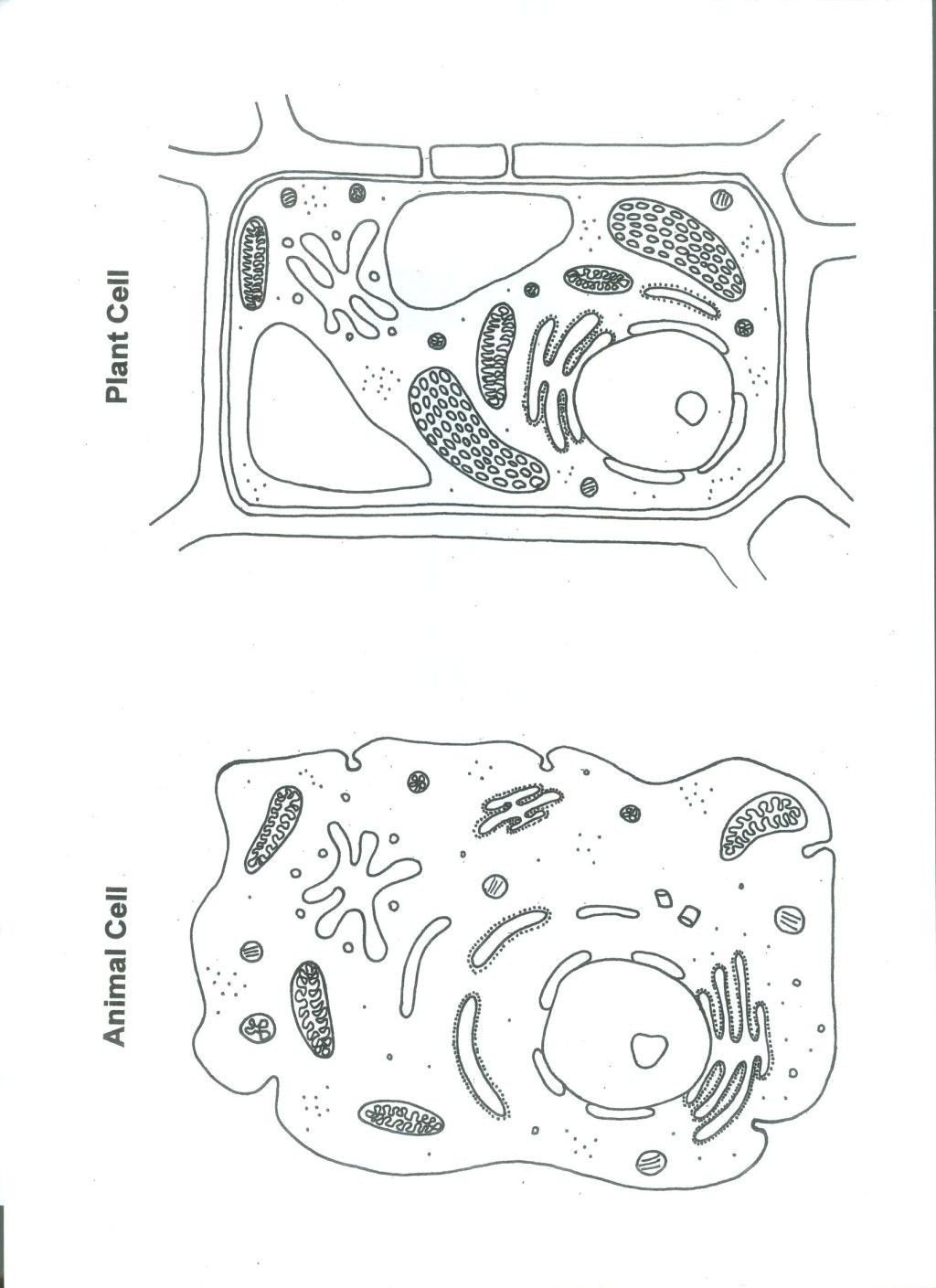 Cell Coloring Worksheets Cell Coloring Sheets Template to Print