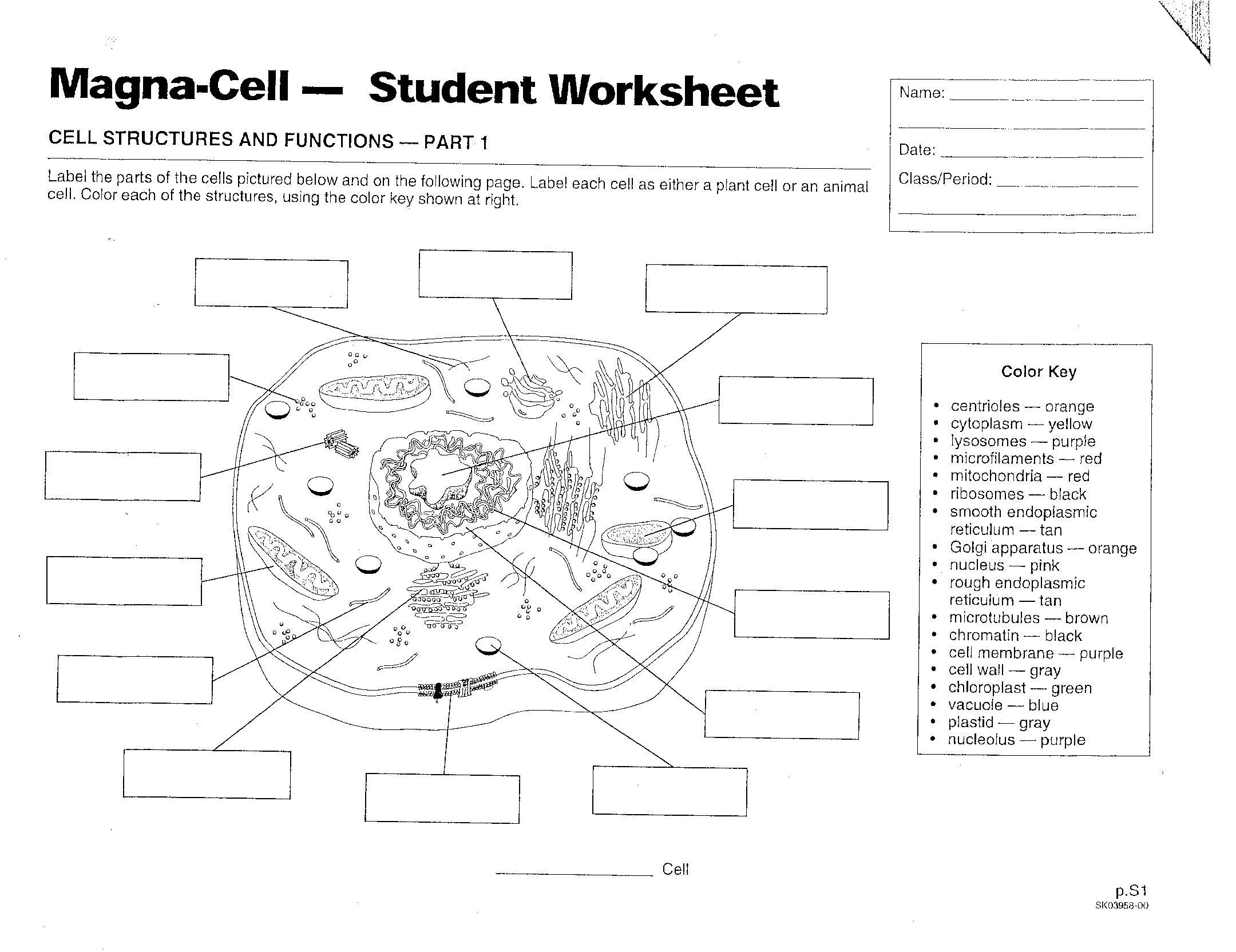 Cell Coloring Worksheets Magna Cell Student Worksheet