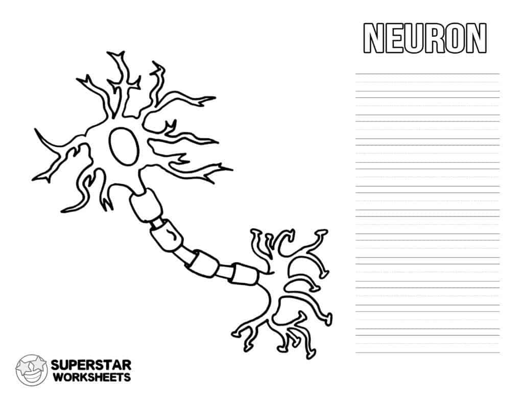 Cell Coloring Worksheets Neuron Cell Worksheets Superstar Worksheets