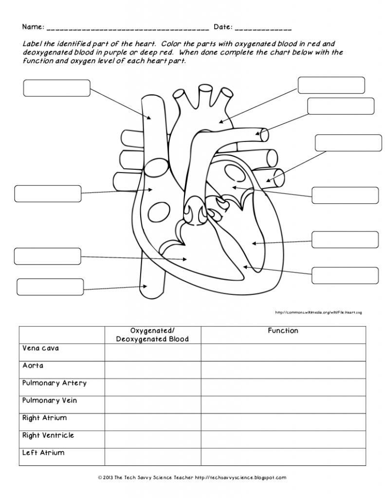chart Human Body System Worksheets Organs 791x1024
