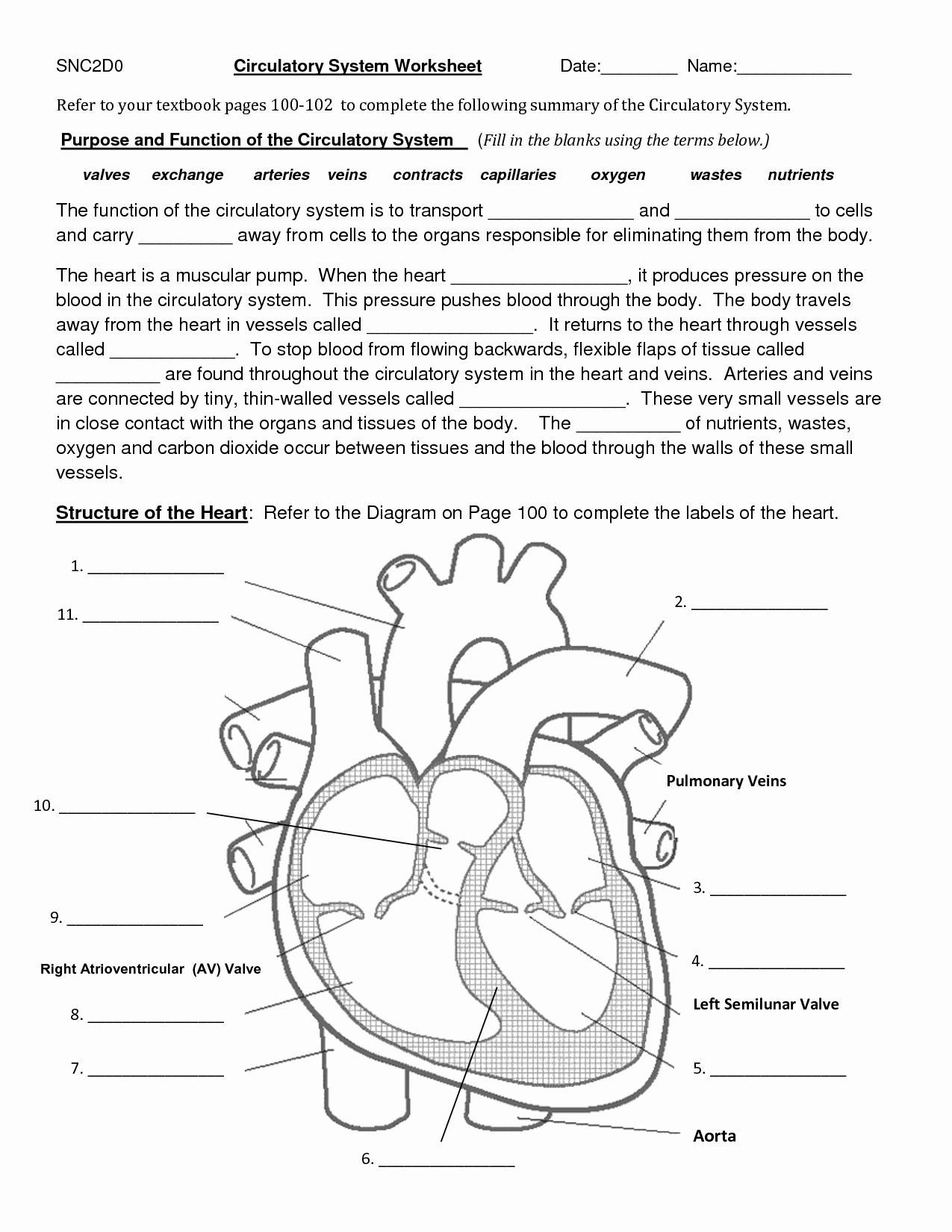 College Anatomy Worksheets College Anatomy Coloring Pages Luxury Image Result for