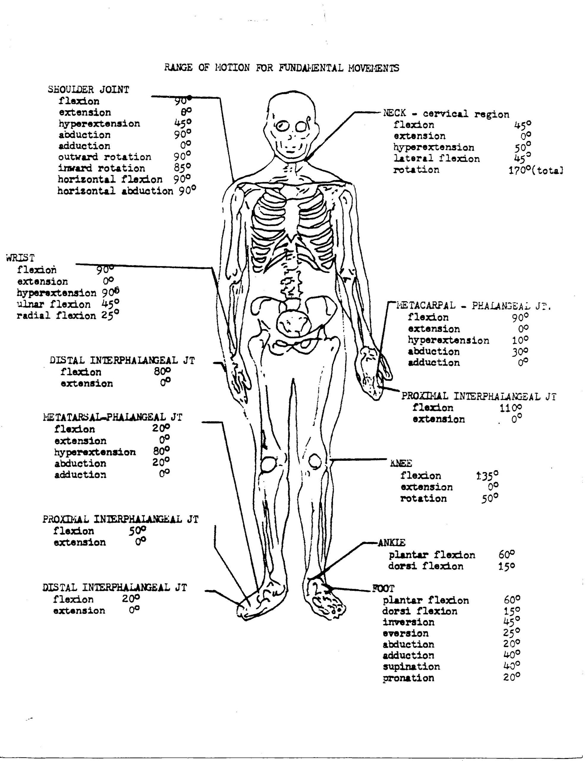 College Anatomy Worksheets Coloring Pages Free Printable Anatomy Pagesor College