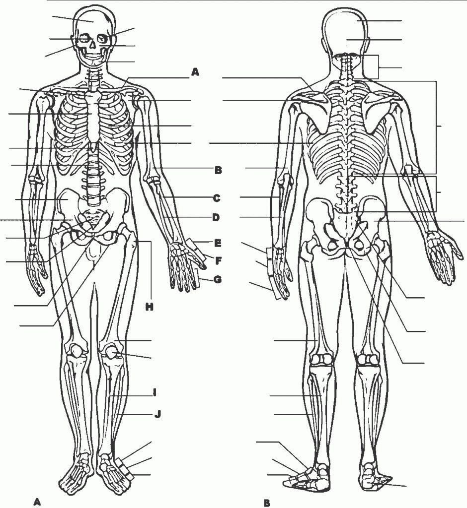 College Anatomy Worksheets Free Printable Human Body Worksheets Anatomy for College