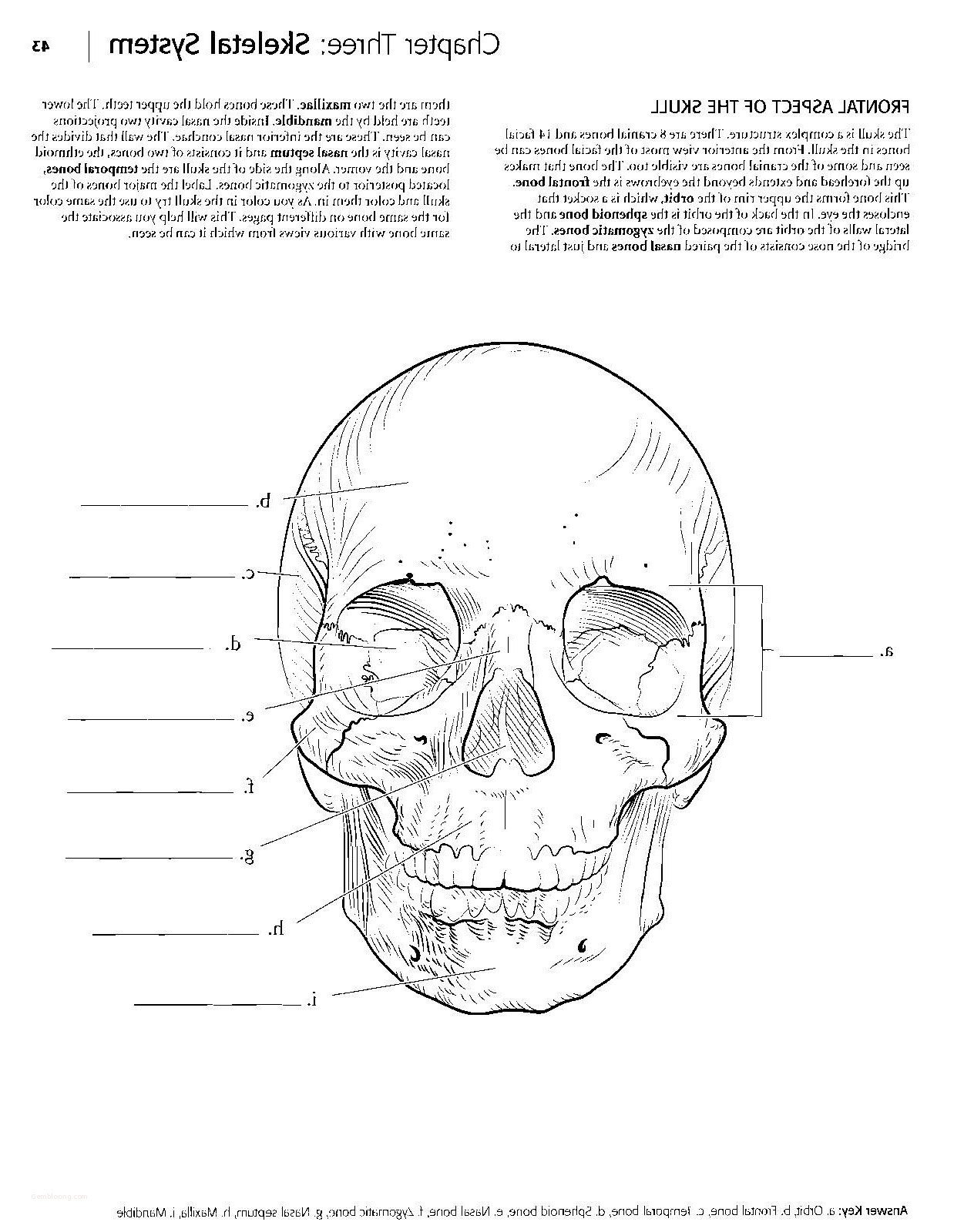 College Anatomy Worksheets Incredible Anatomy Coloring Pages Worksheet Book for