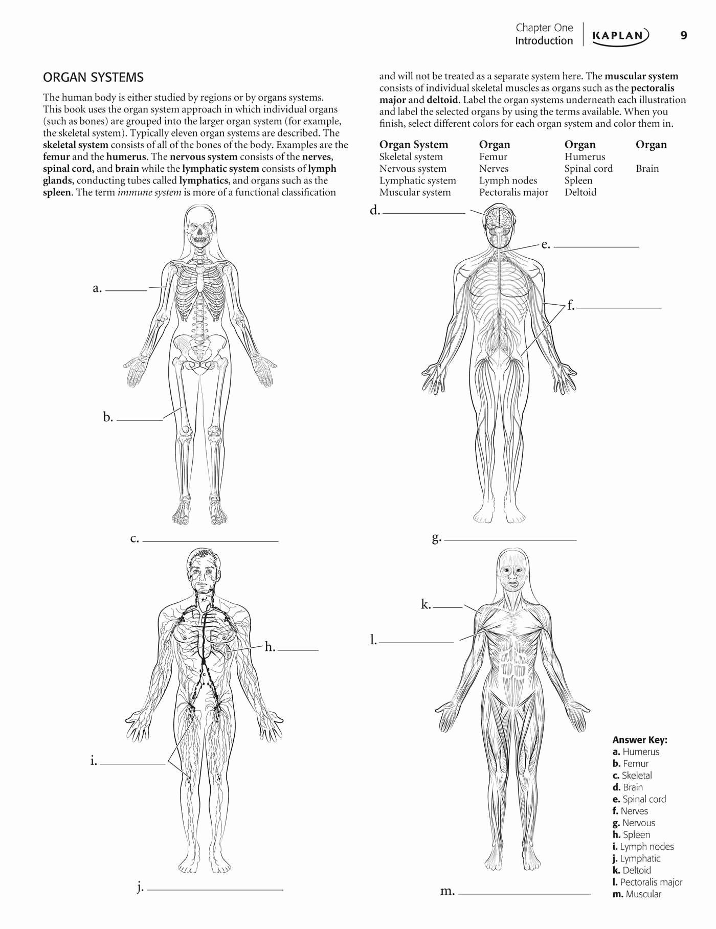 College Anatomy Worksheets Vertebral Anatomy Worksheet