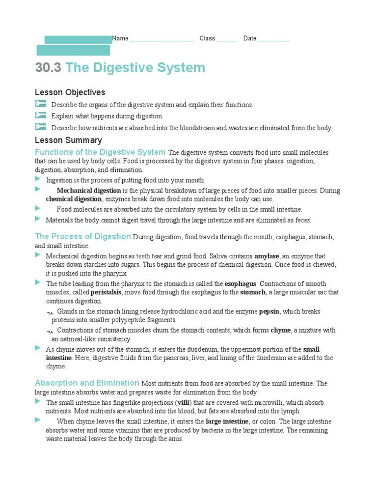 Digestive System Coloring Worksheet Digestive System Worksheet 1 Digestion