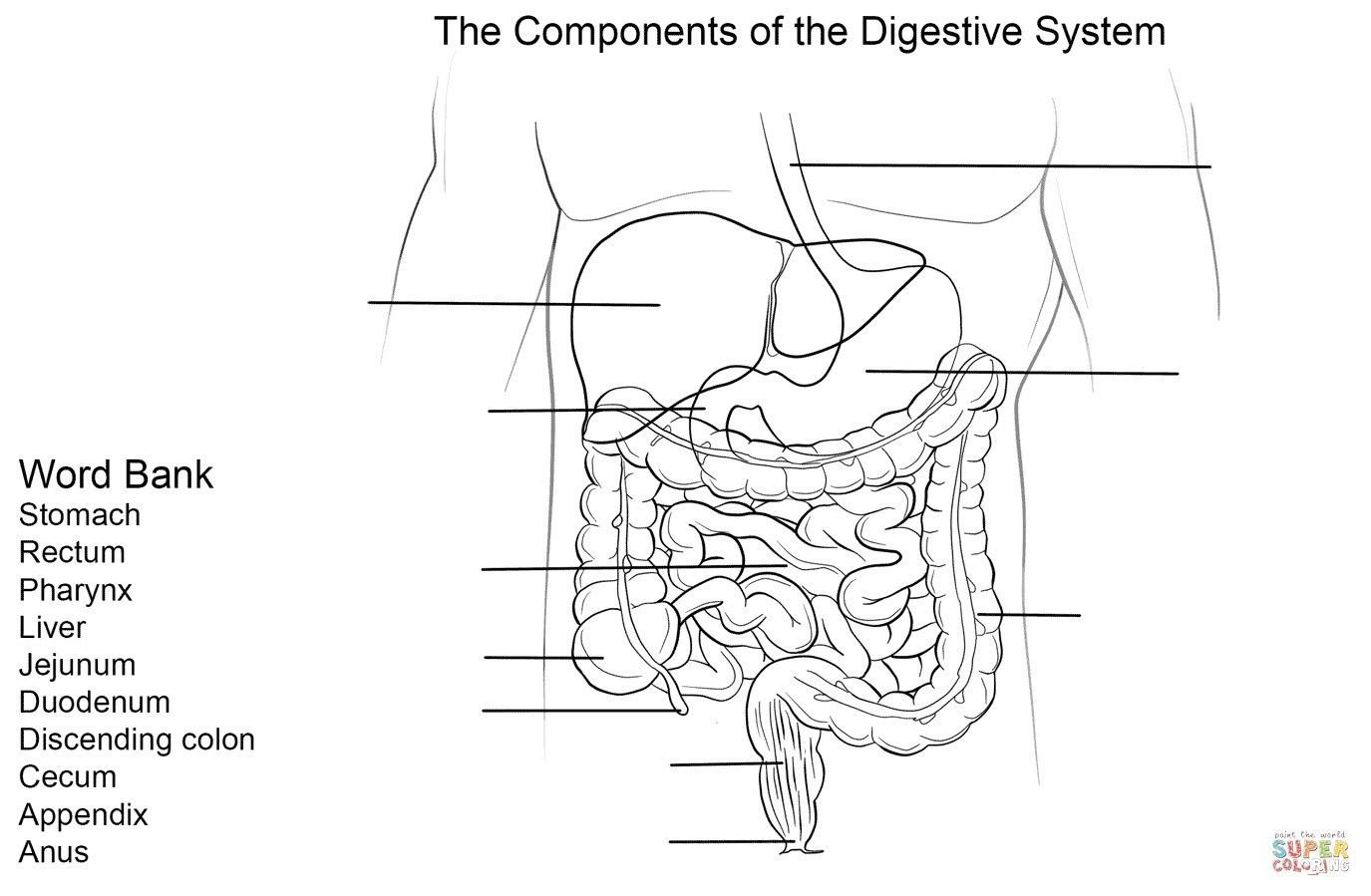 Digestive System Worksheets Middle School Digestive System Diagram to Label Digestive System Diagram
