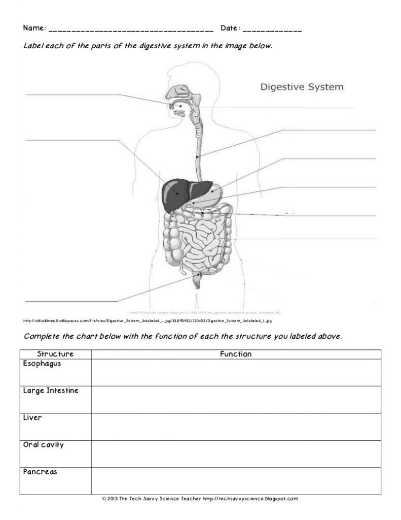 Digestive System Worksheets Middle School Digestive System Diagram Worksheet Versaldobip