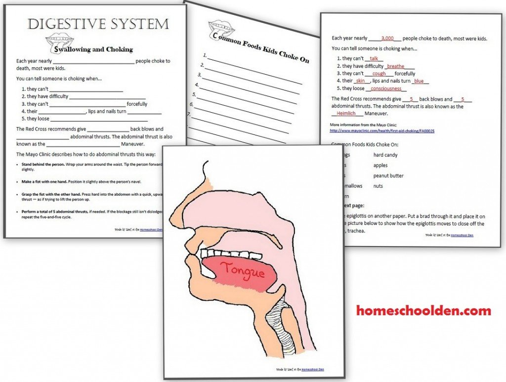 Digestive System Worksheets Middle School Digestive System Hands Activities Esophagus Stomach