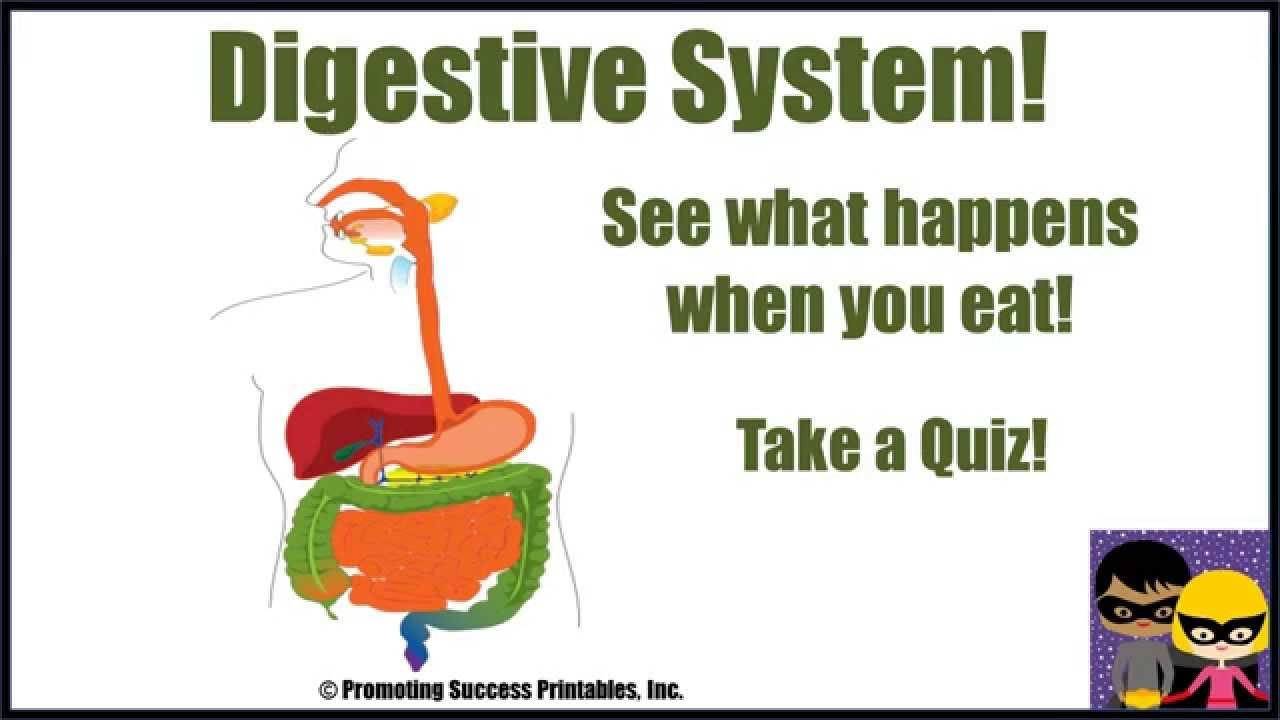 Digestive System Worksheets Middle School Digestive System Human Body Science Video for Middle School Digestion Process