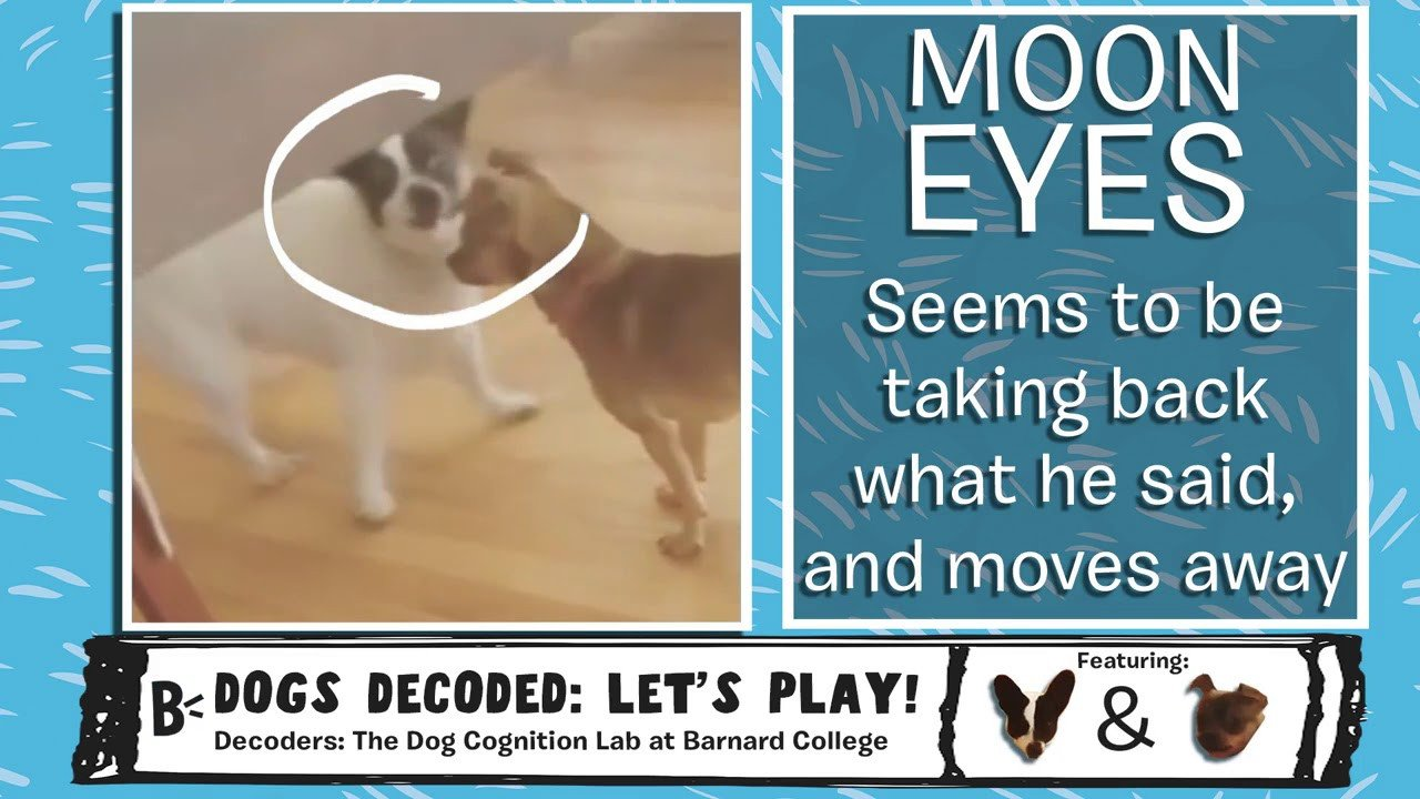 Dogs Decoded Worksheet Dogs Decoded Your Dog S Body Language Explained Ep 1 How Dogs Play