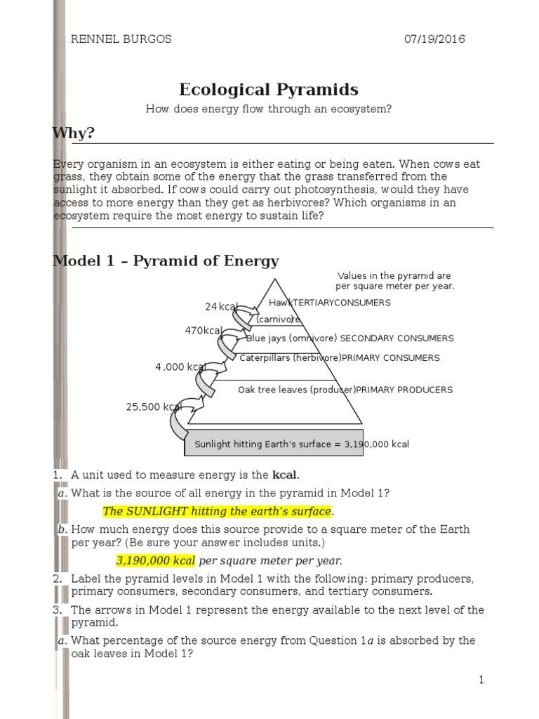 Ecosystem Worksheet Answer Key 26 Ecological Pyramids S Rennel Biomass Ecology