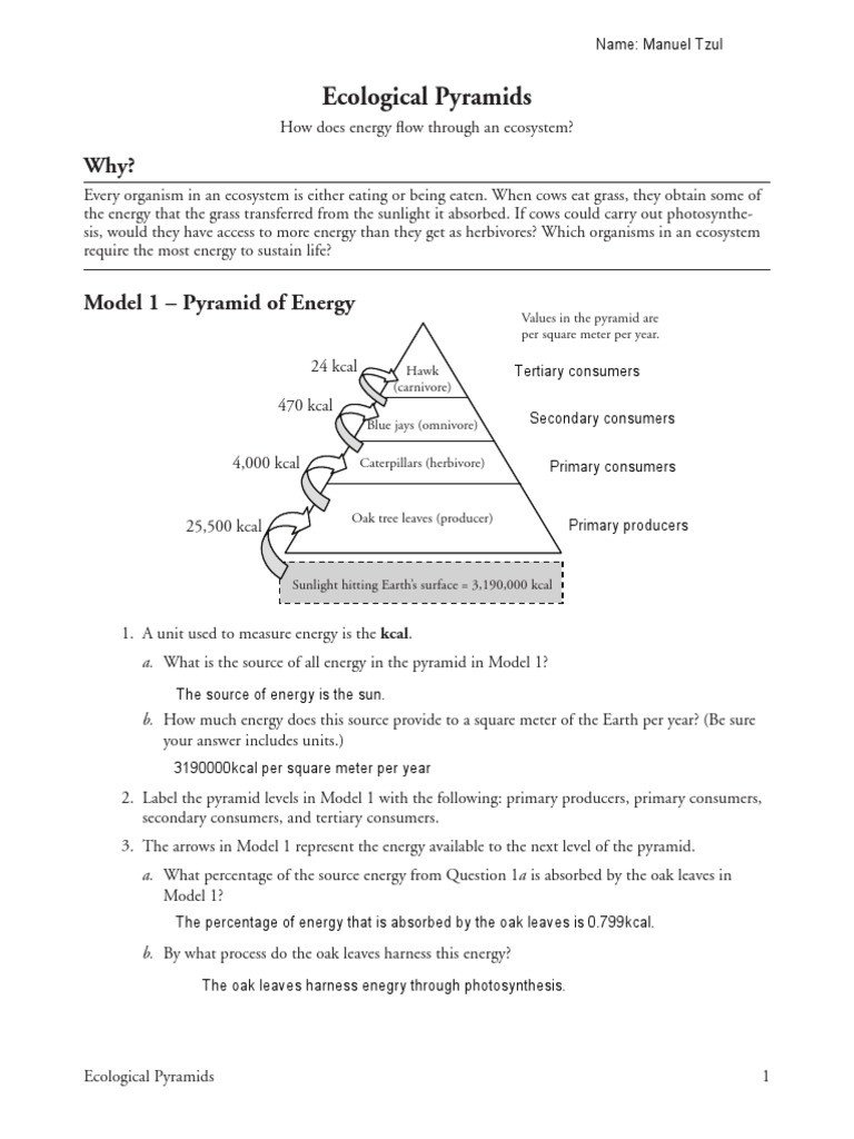 Ecosystem Worksheet Answer Key Energy Flow In Ecosystems Worksheet Answer Key