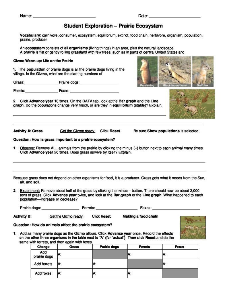 Ecosystem Worksheet Answer Key Prairie Ecosystems Gizmo
