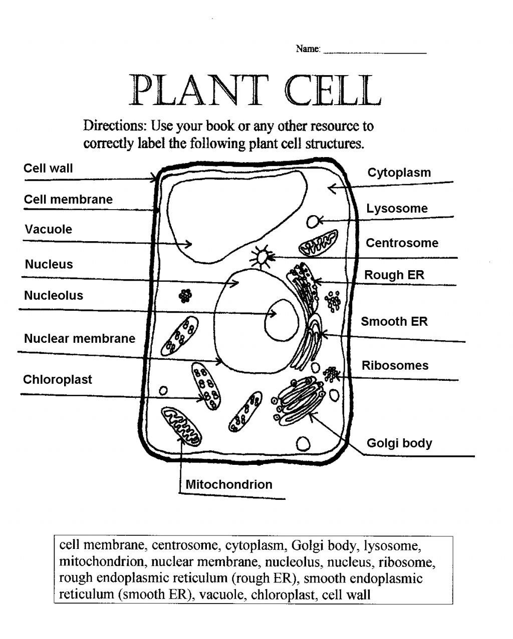 Elementary Cell Worksheets 77 Best S Animal Cell Coloring Worksheet