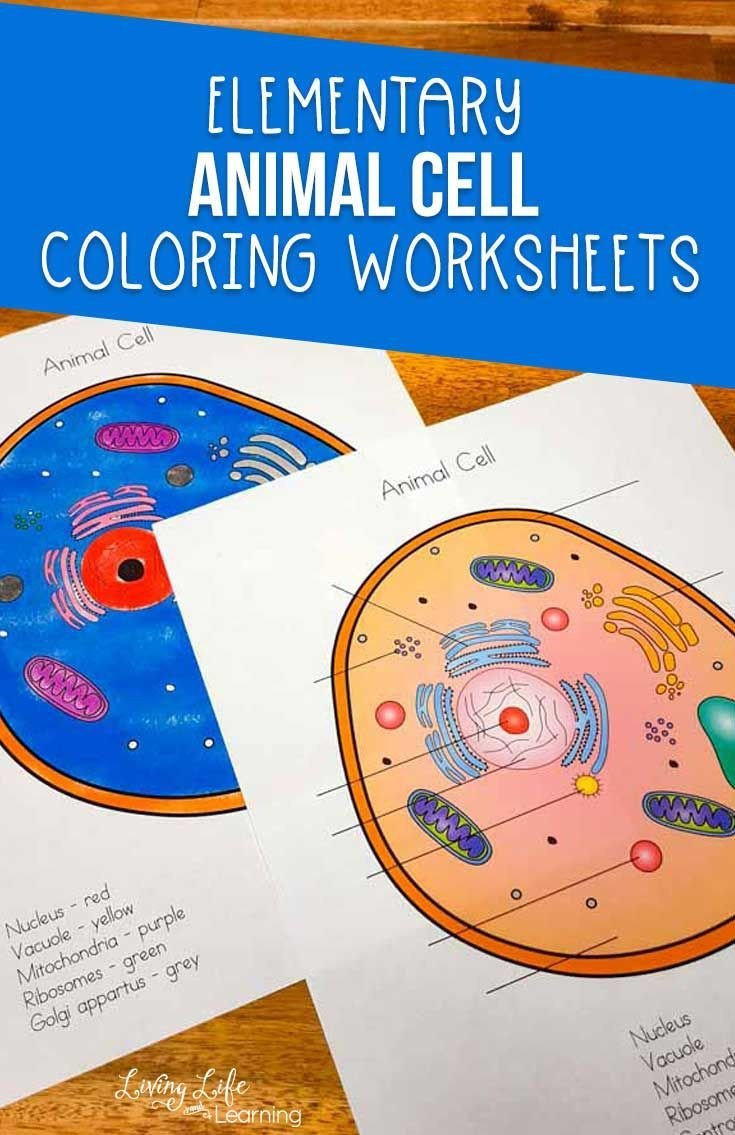 Elementary Cell Worksheets Animal Cell Coloring Worksheet