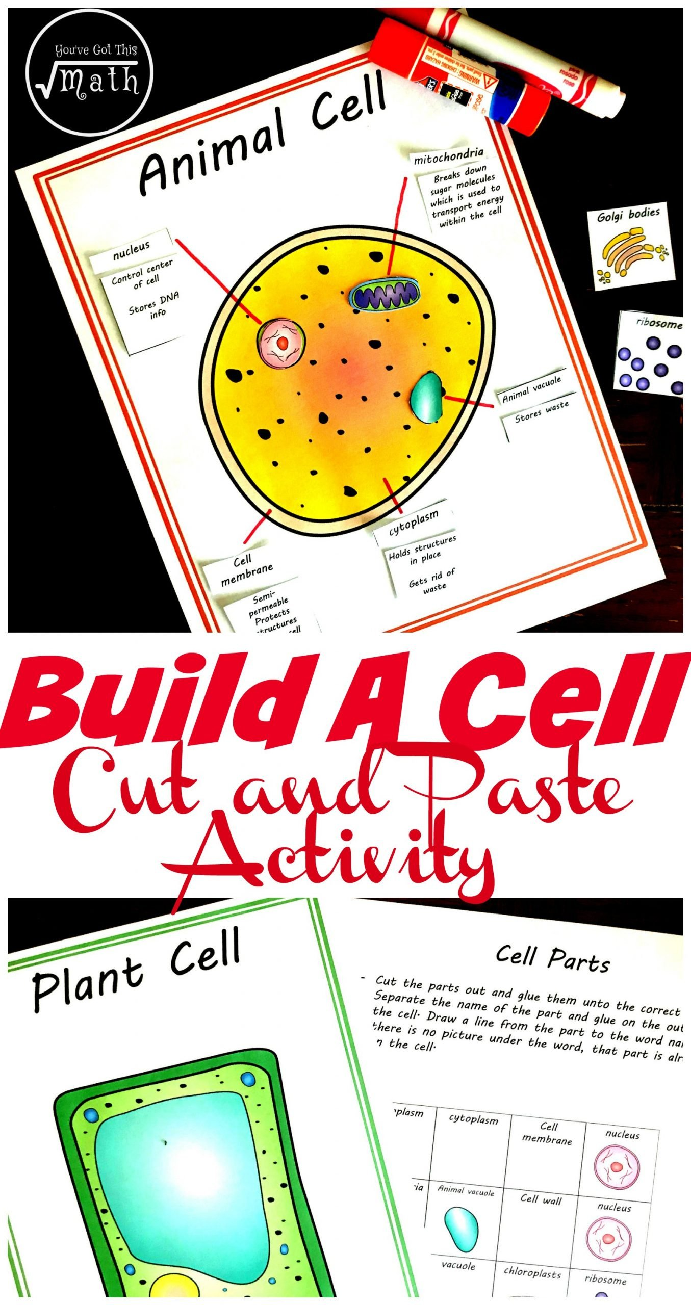 Elementary Cell Worksheets Free Cut and Paste Animal and Plant Cell Worksheet