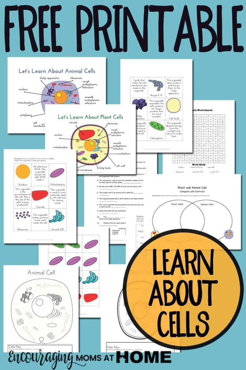 Elementary Cell Worksheets Plant and Animal Cell Printables Grades 4 6