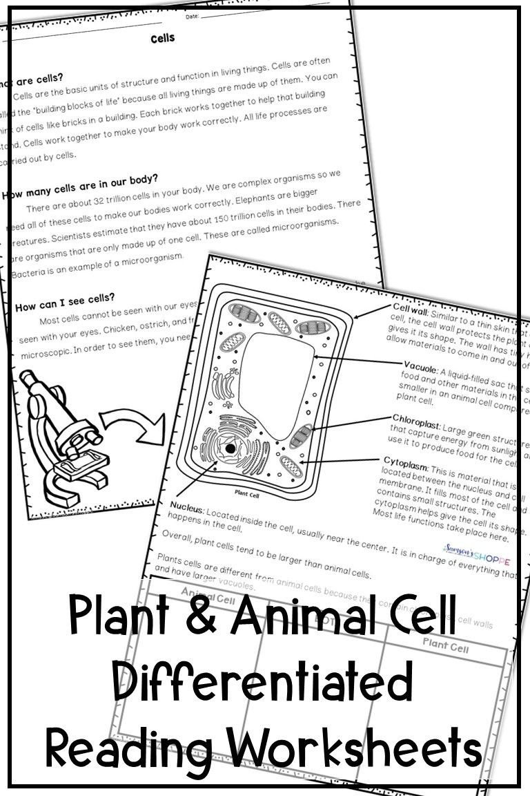 Elementary Cell Worksheets Plant and Animal Cells Differentiated Reading Activity