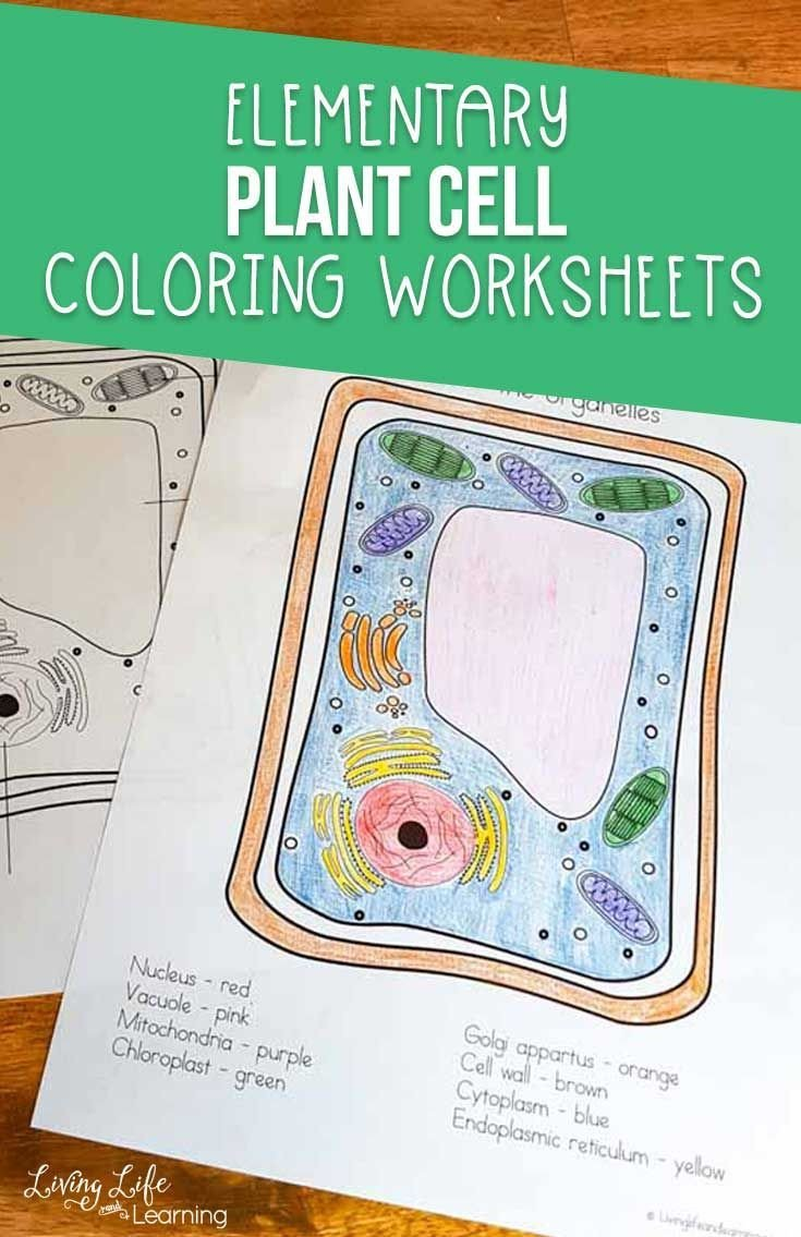 Elementary Cell Worksheets Plant Cell Coloring Worksheet
