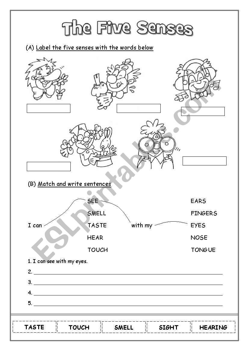 Five Senses Worksheets Pdf the Five Senses Esl Worksheet by Naty85