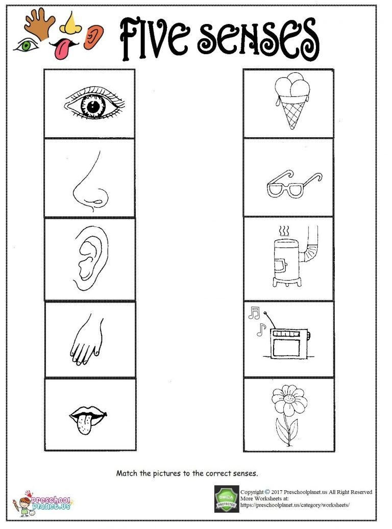 Five Senses Worksheets Preschool Printable Five Senses Worksheet
