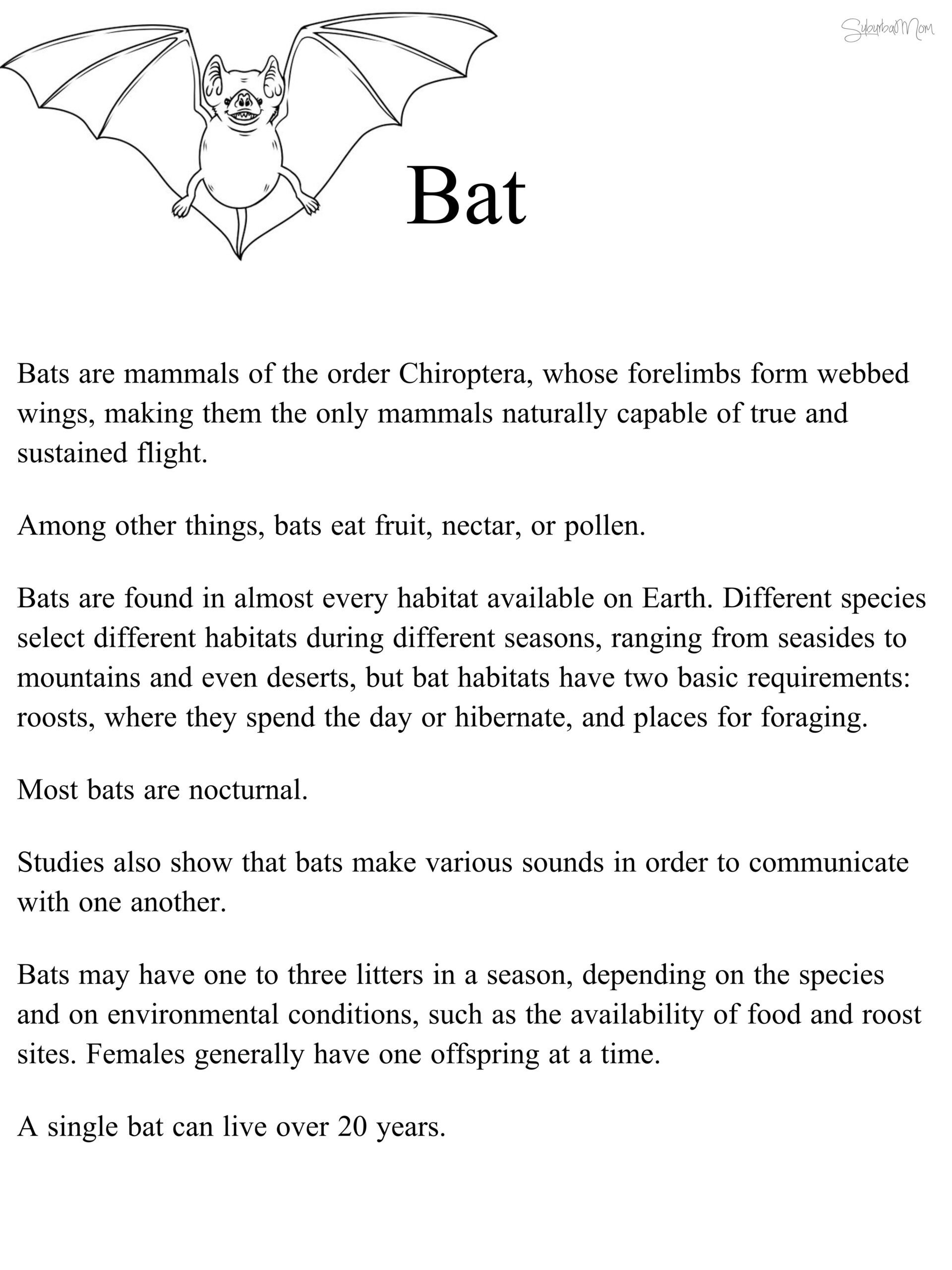 Free Habitat Worksheets Worksheet Kids Activities Bats Worksheets First Grade