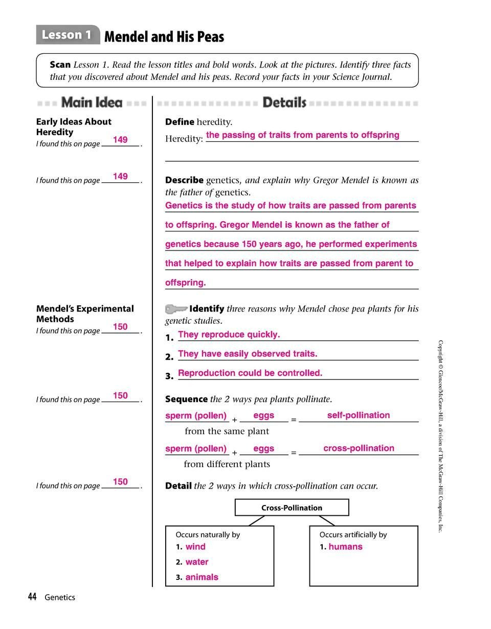 Genetic Traits Worksheet Answers for Mendel Worksheets 44 Simplebooklet