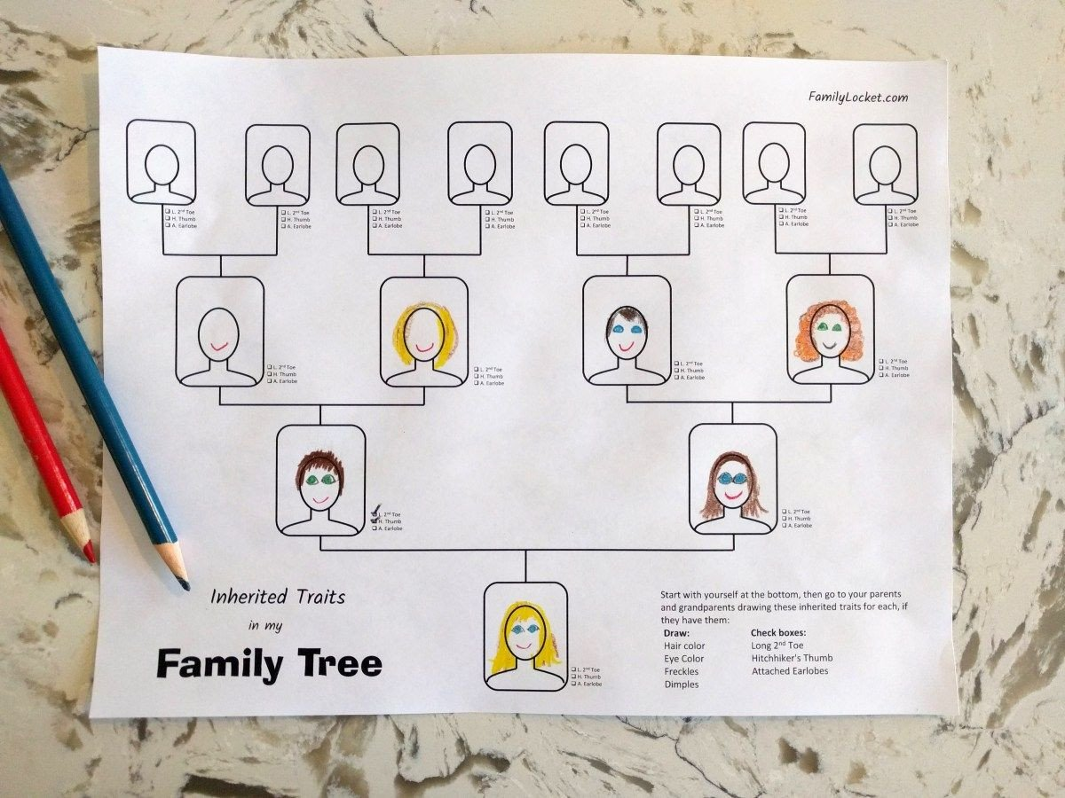 Genetic Traits Worksheet Inherited Traits Family Tree Worksheet