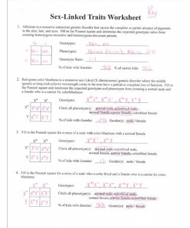 Genetic Traits Worksheet Linked Traits Worksheet Pdf Answer Key – Scouting Web