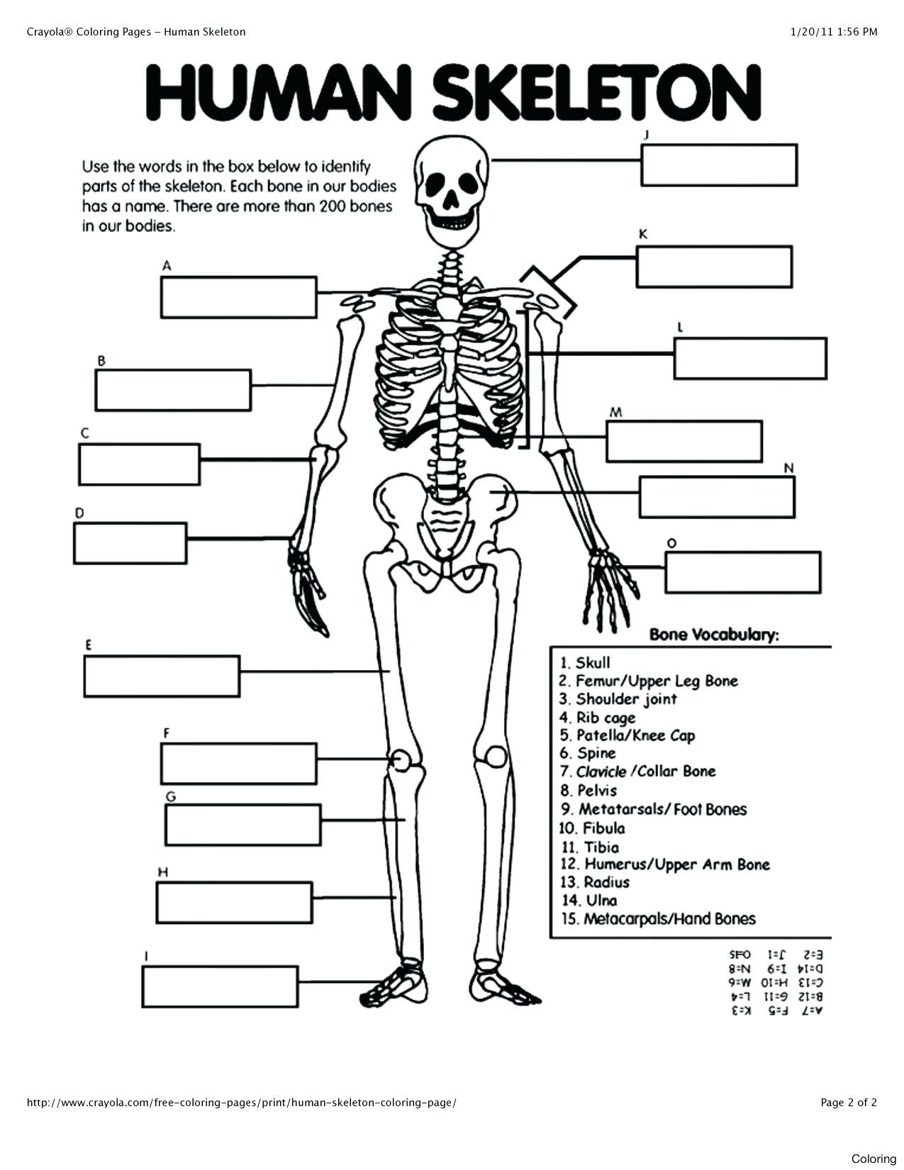 Human Anatomy Worksheets for College 41 Free Printable Anatomy Coloring Pages Ideas – Slavyanka