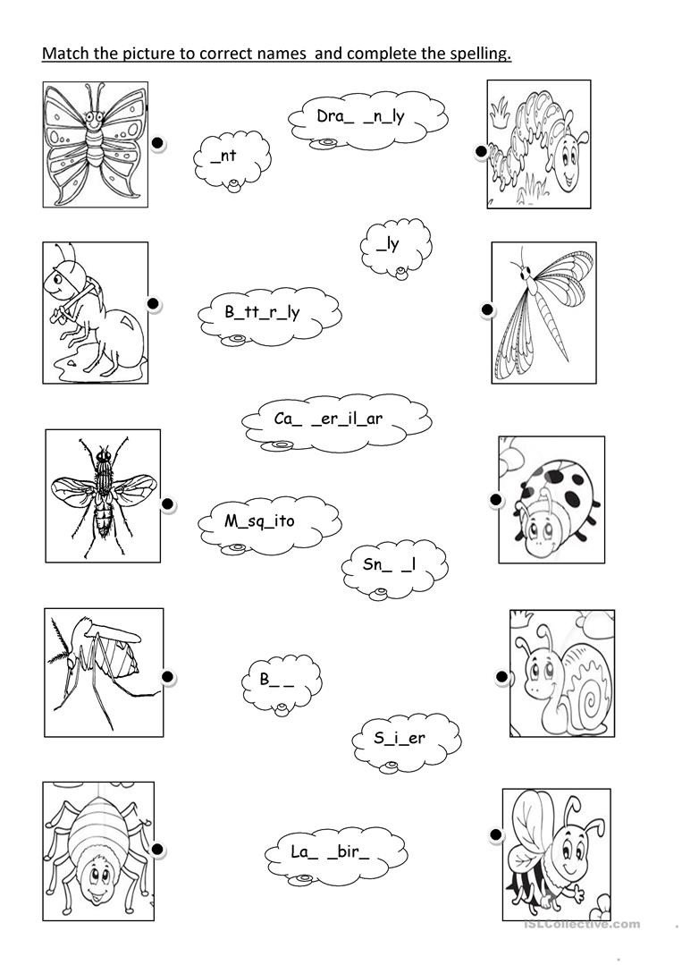 Insects Worksheets for Kindergarten Insects English Esl Worksheets for Distance Learning and