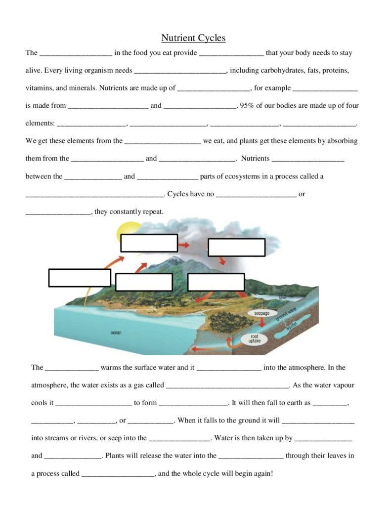 Integrated Science Cycles Worksheet Answers Nutrient Cycles Worksheet