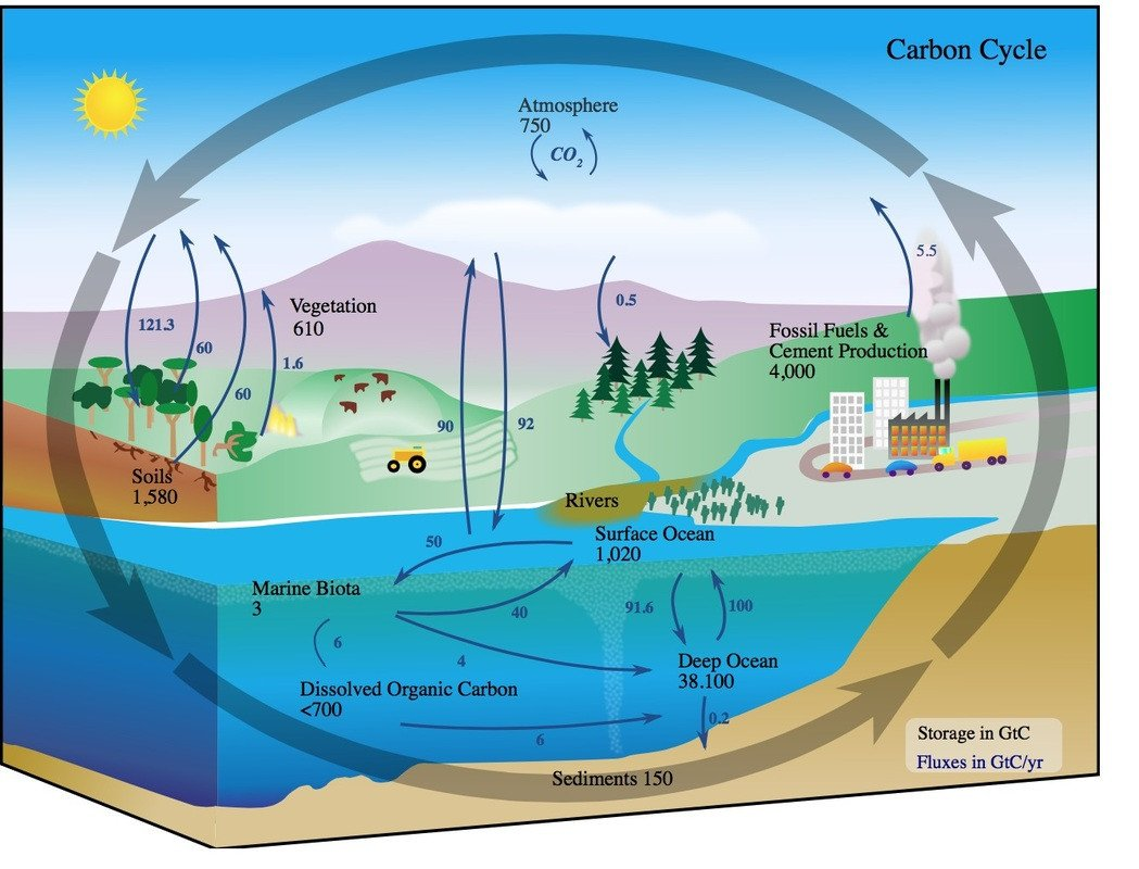 Integrated Science Cycles Worksheet Answers the Carbon Cycle Integrated Science