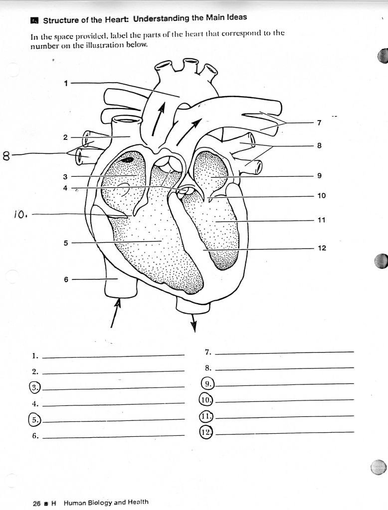 Printable Anatomy Labeling Worksheets Human Anatomy Labeling Worksheets Tag Label the Heart