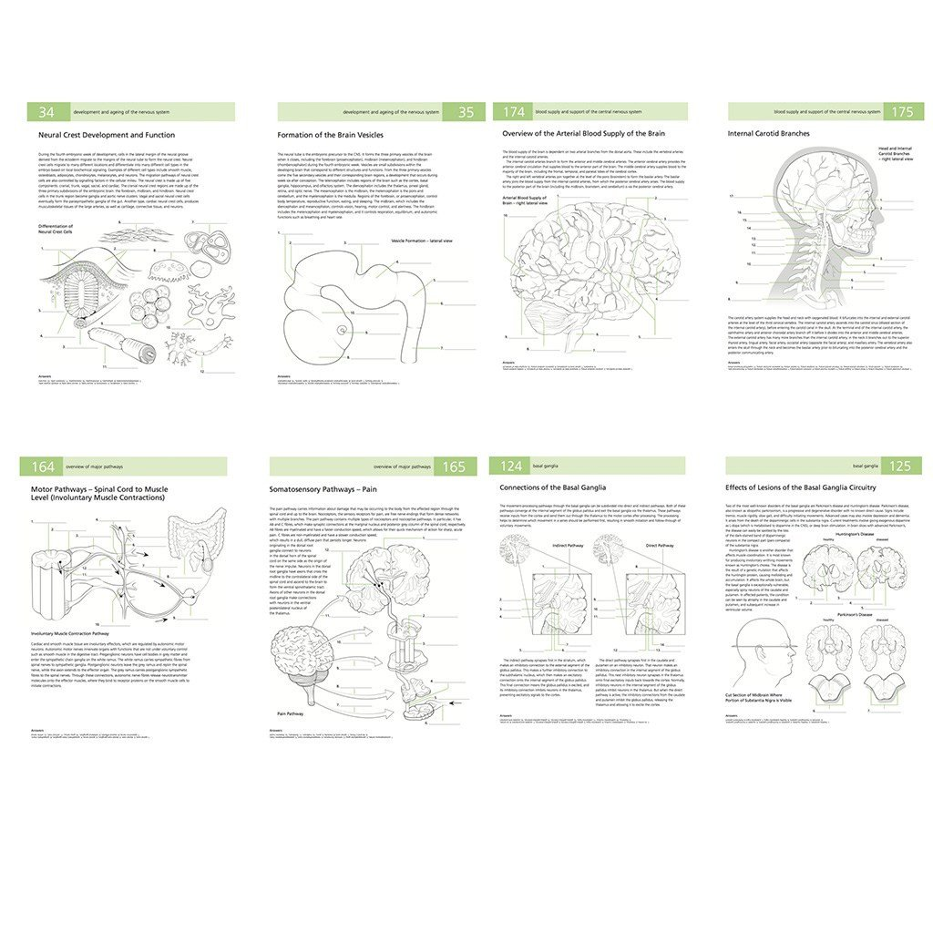 Printable Anatomy Labeling Worksheets the Human Brain Students Self Test Coloring Book Medical