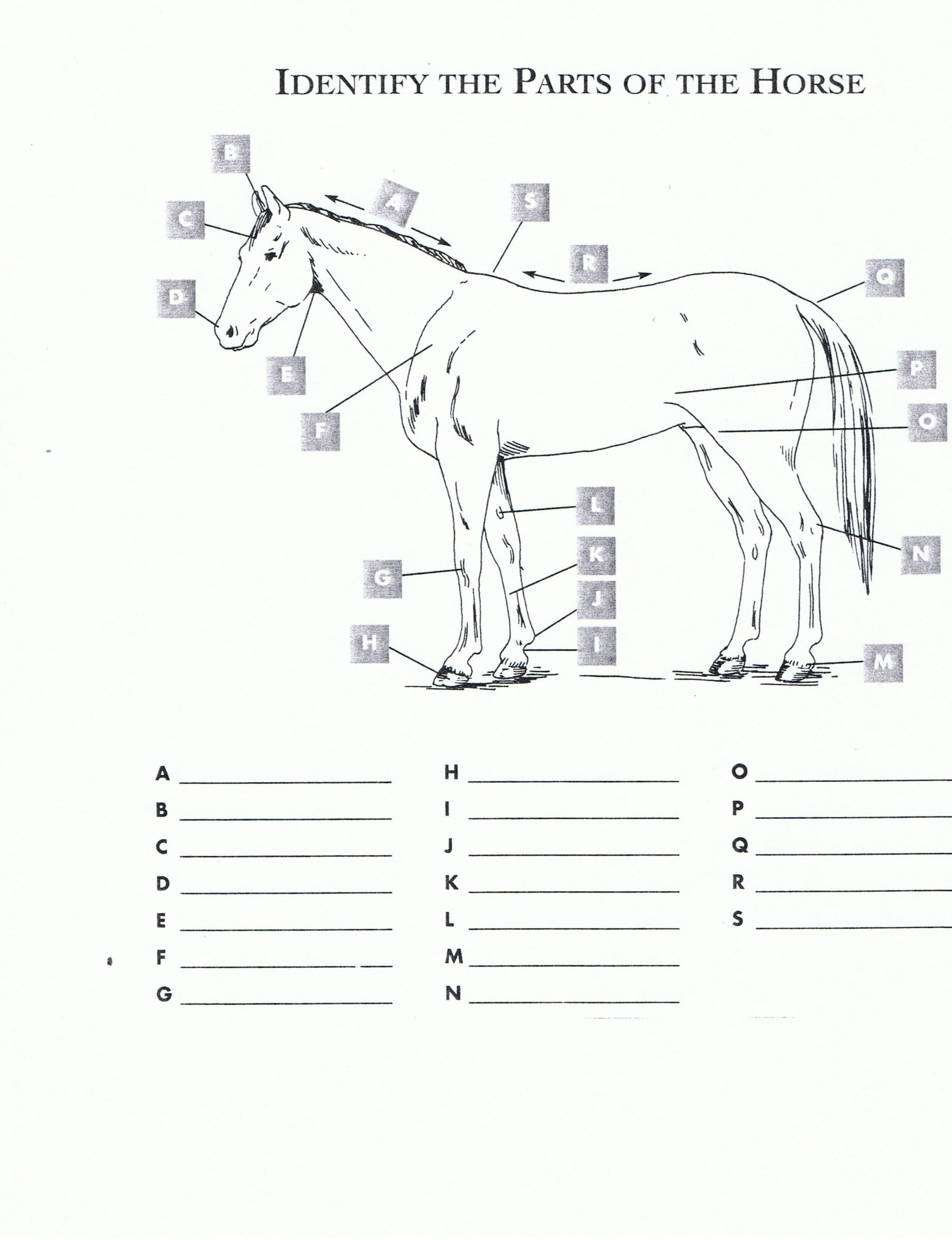 Printable Horse Anatomy Worksheets Free Printable Horse Worksheets