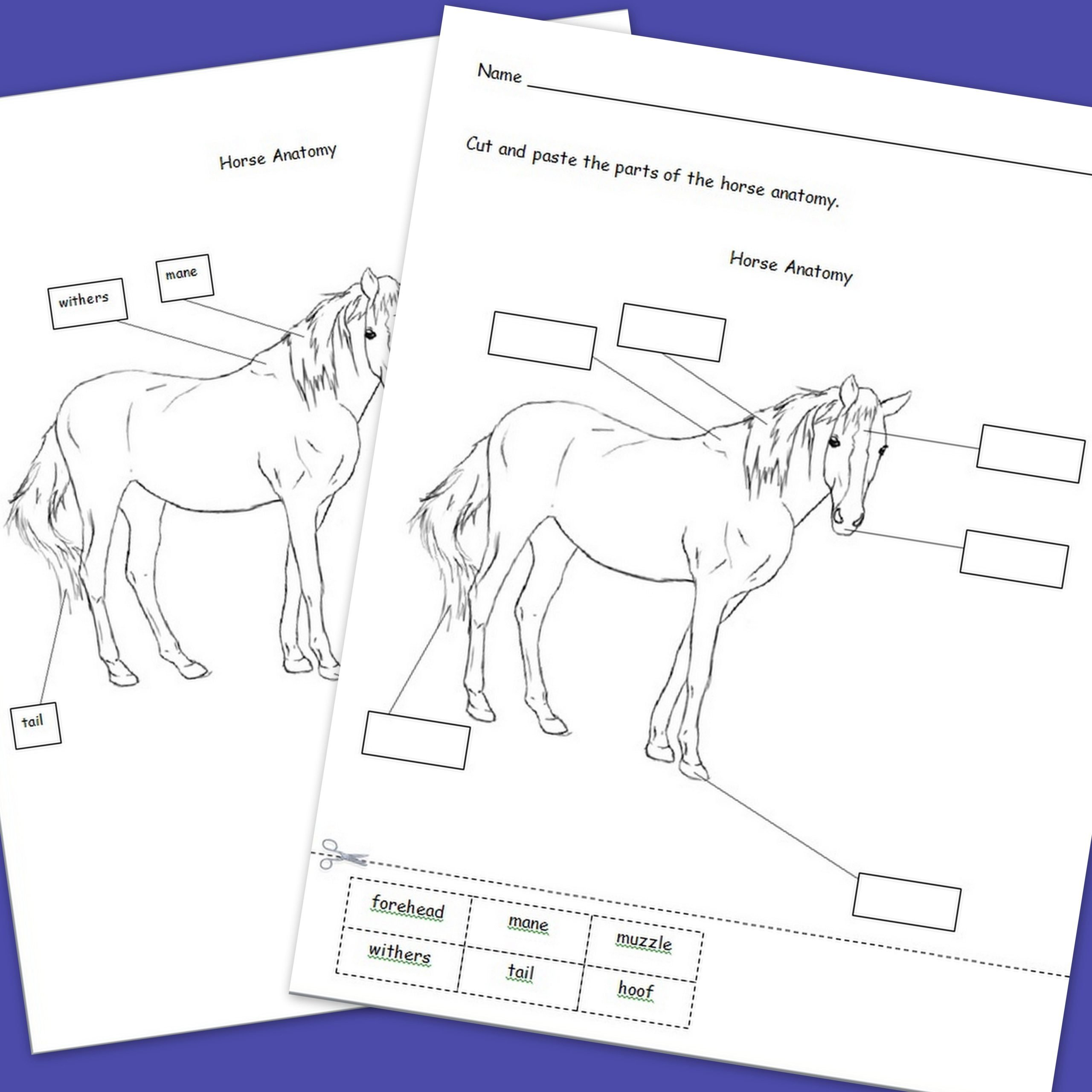 Printable Horse Anatomy Worksheets Pin On Autism Interactive Teaching Ideas