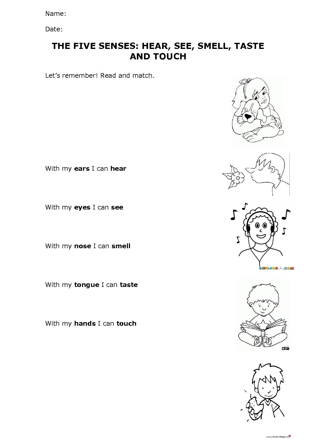 Sense Of Hearing Worksheet the Five Senses Hear See Smell Taste and touch Worksheet