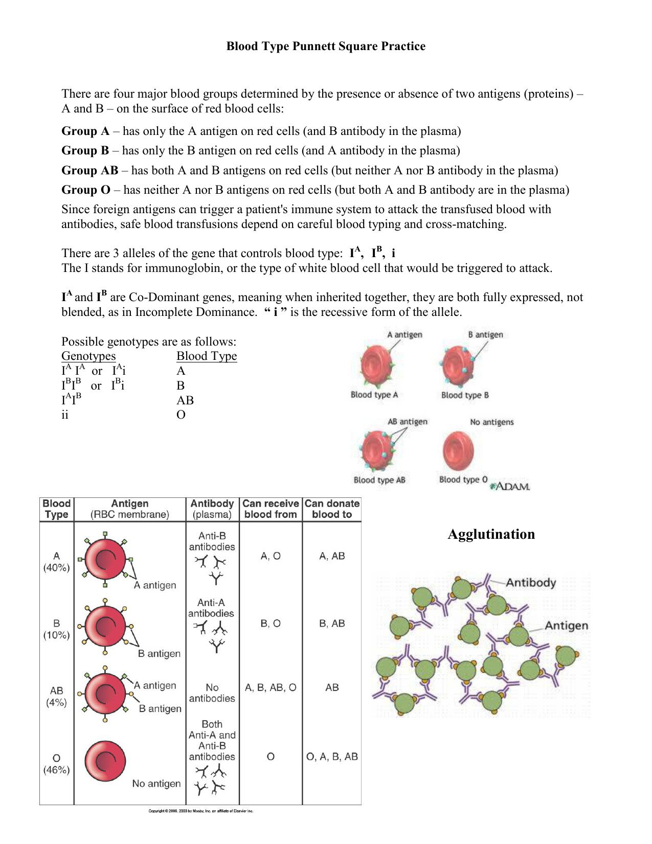 blood type punnett square practice as well as blood types worksheet answers