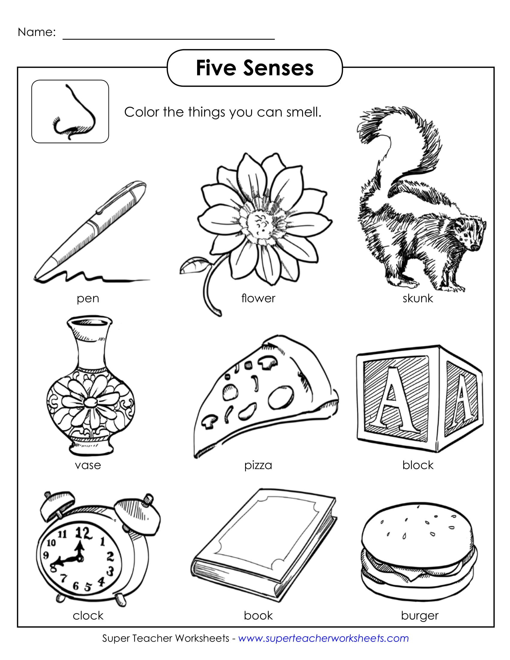 5 Senses Printable Worksheets Worksheet Senses Printable Worksheets and Activities for