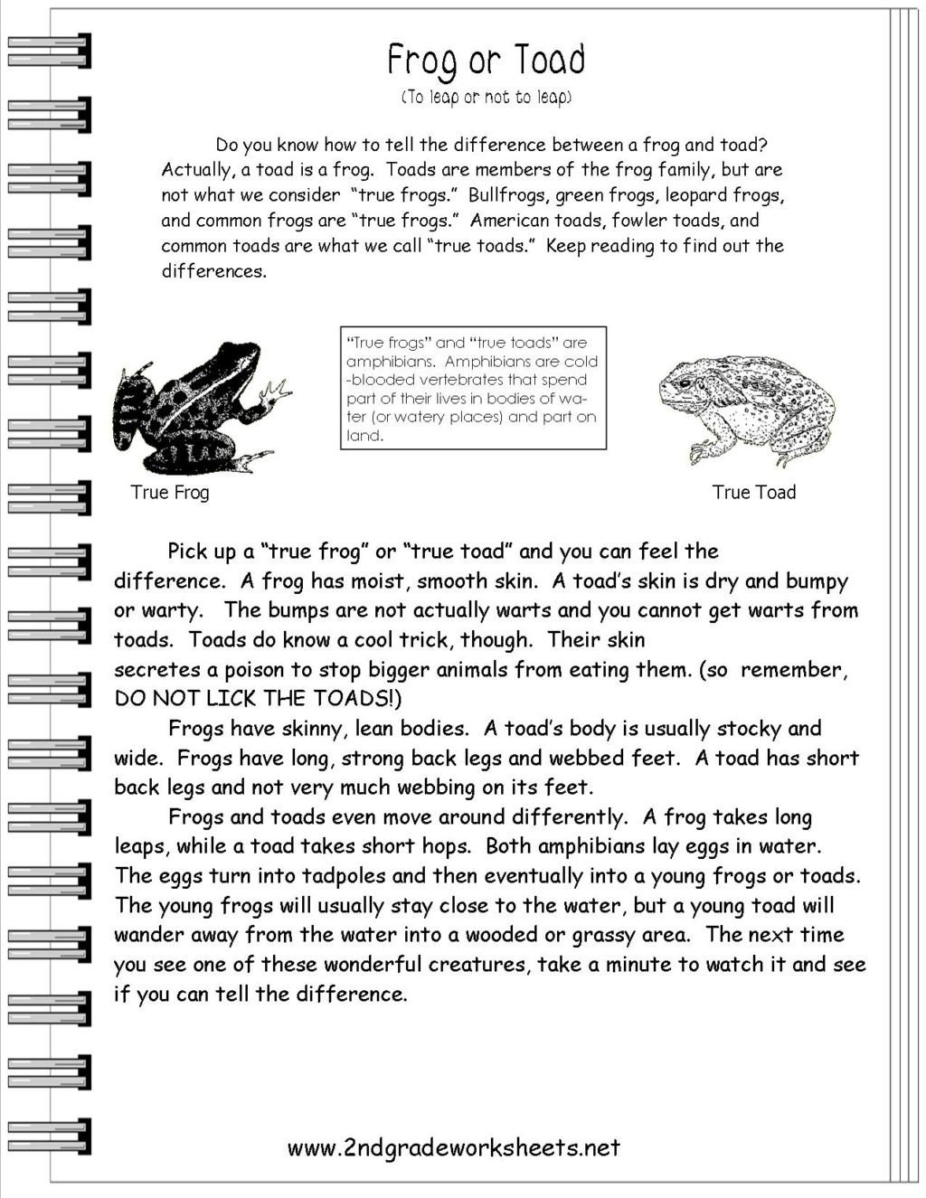 frogortoad 2nd grade passage worksheet second with questions aboutbeth cady stanton ac plishments free reading 1024x1325