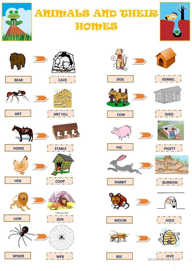 Animal Homes Worksheet Animals and their Homes Worksheet Free Esl Printable